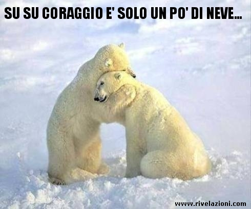 Orso polare dojo smile for Immagini divertenti con frasi gratis
